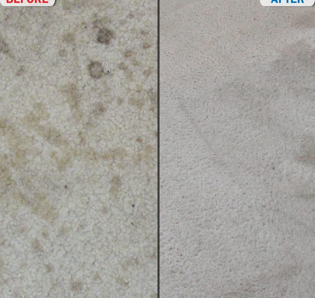 Bedroom Carpet Before and After Photo 4